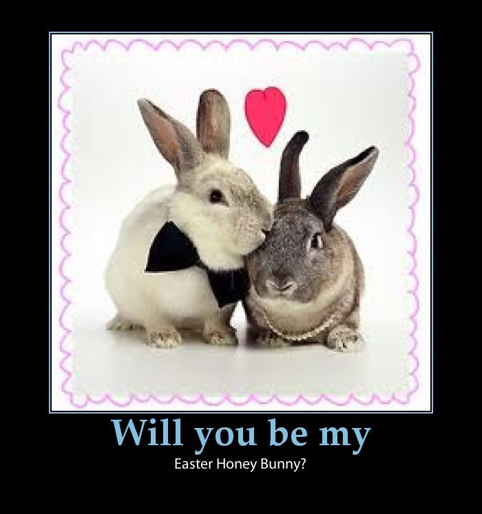 Easter Hunny Bunny Pictures, Photos, And Images For