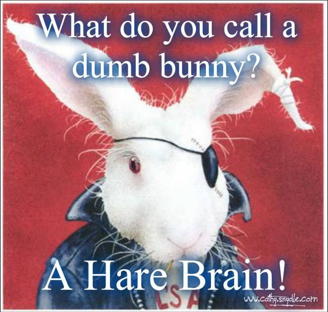 What Do You Call A Dumb Bunny Pictures Photos And Images