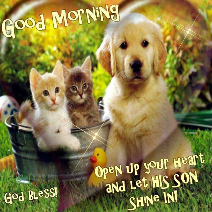 Good Morning Good Pictures Photos And Images For