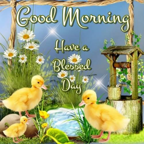 Good Morning Meme Blessed : Good morning have a blessed day pictures photos and