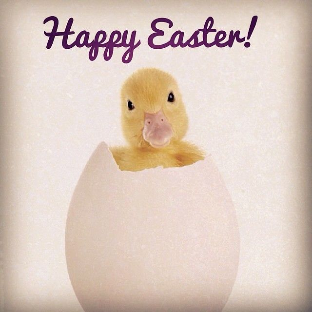Happy Easter Pictures With Quotes: Happy Easter Pictures, Photos, And Images For Facebook
