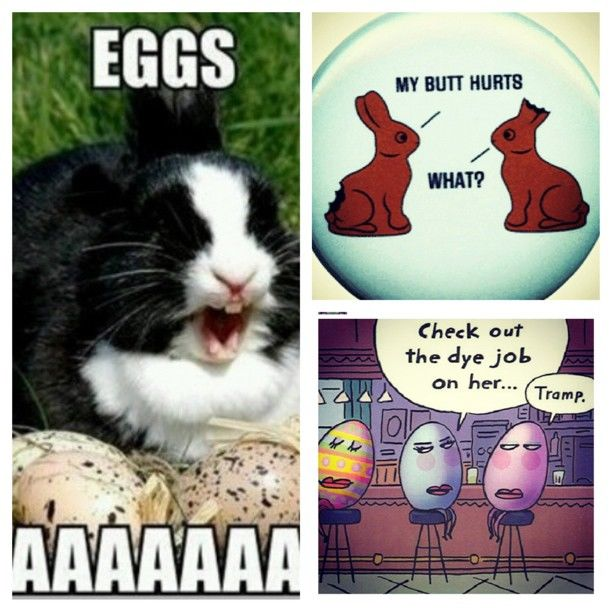 funny easter collage pictures photos and images for facebook