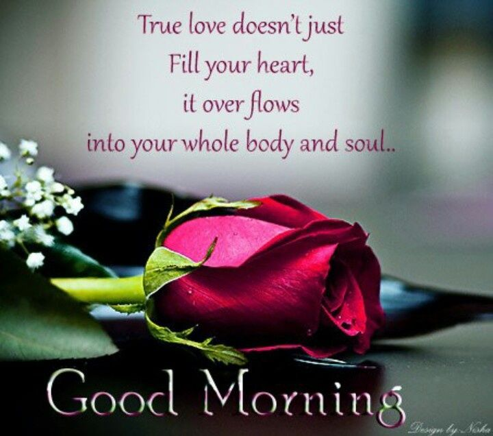 Good Morning Love Quotes Gorgeous Good Morning True Love Pictures Photos And Images For Facebook