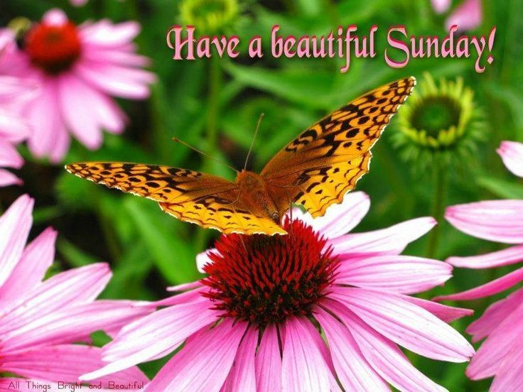 Have A Beautiful Sunday Pictures, Photos, And Images For