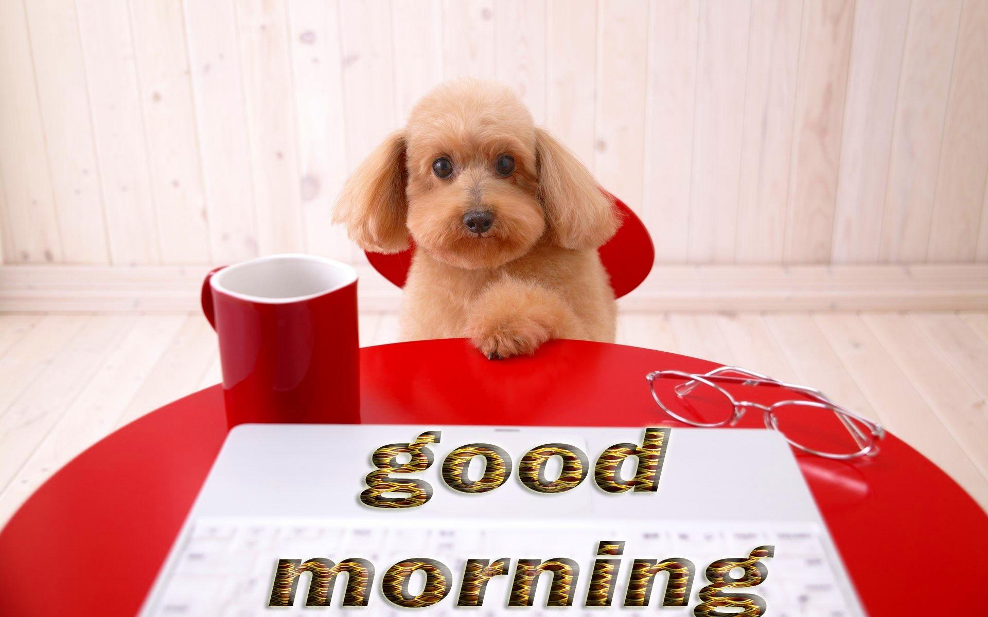 Good Morning Puppy