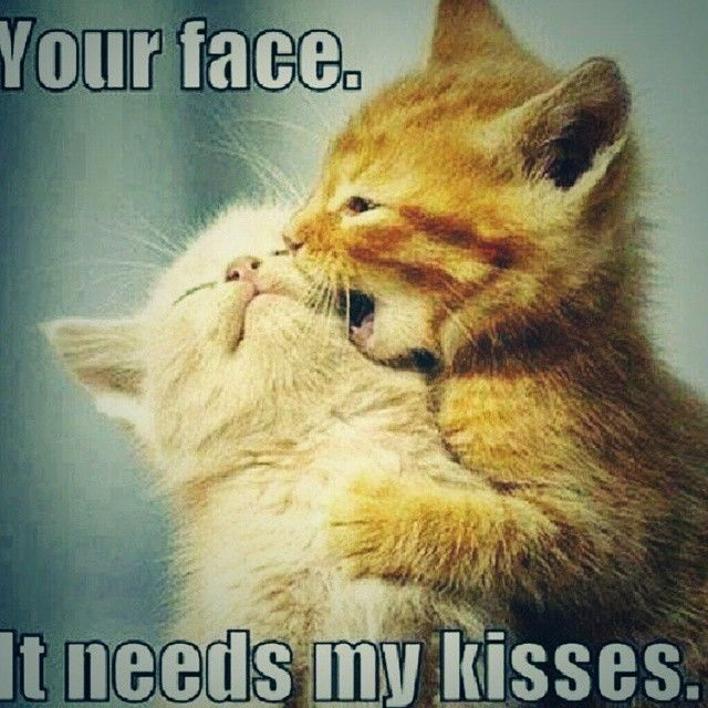 Short Sweet I Love You Quotes: Your Faces Need My Kisses Pictures, Photos, And Images For