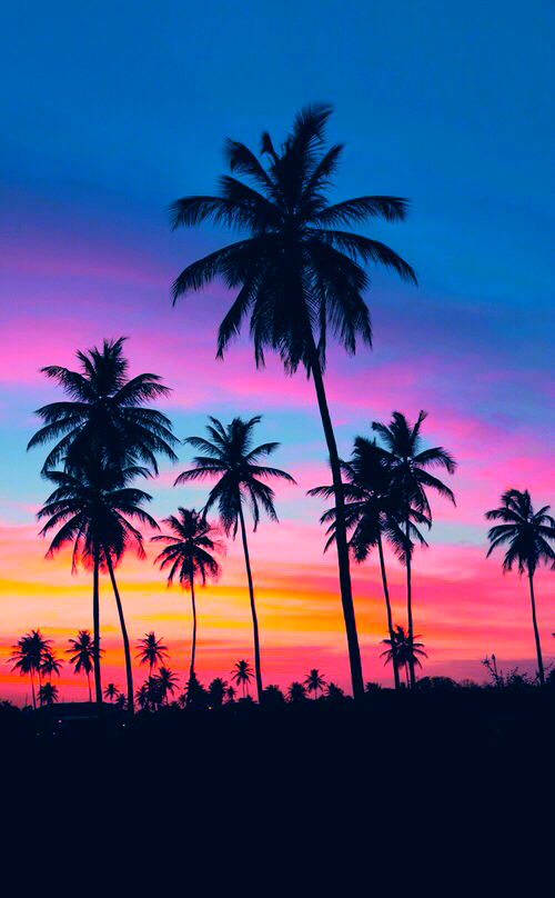 palm trees sunset tumblr - photo #20