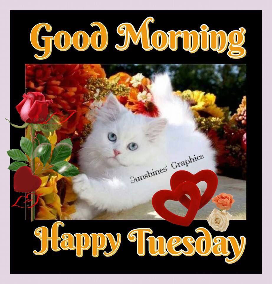 happy tuesday my dear   smile always and be happy  tuesday