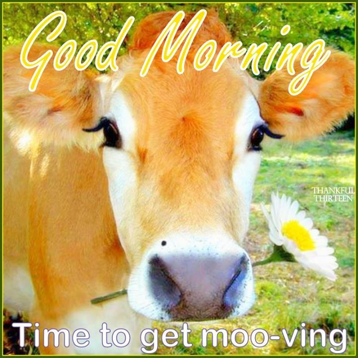 Image result for good morning, get moving