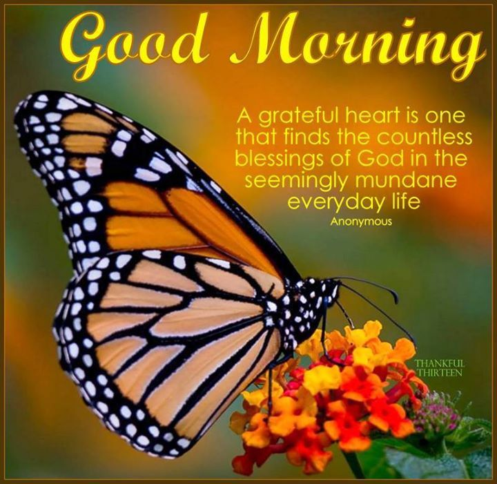 Grateful Good Morning Quote Pictures, Photos, and Images
