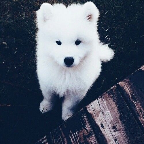 Cute White Dog Pictures Photos And Images For Facebook