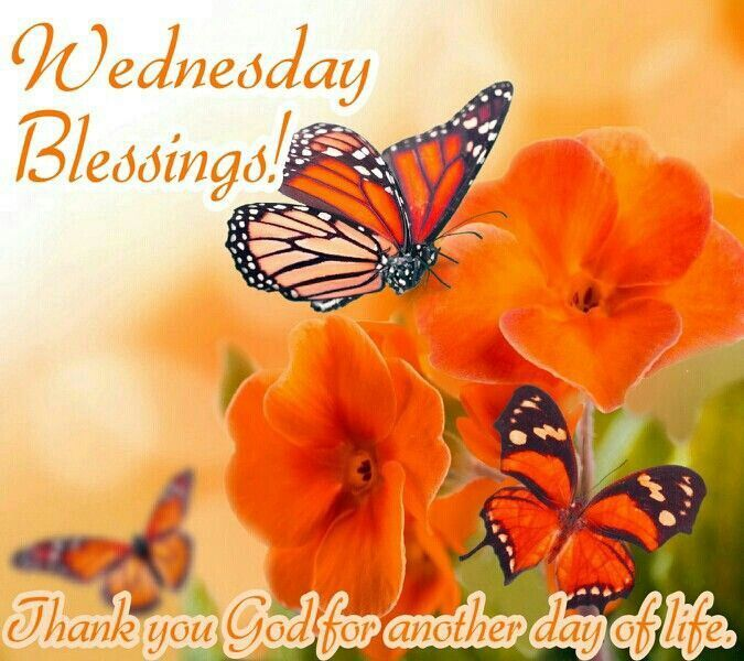 Image result for thankful wednesday