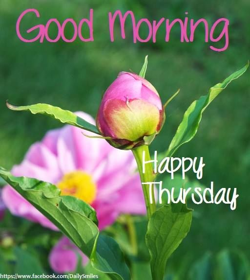 Good Morning Quotes Thursday : Good morning happy thursday pictures photos and images