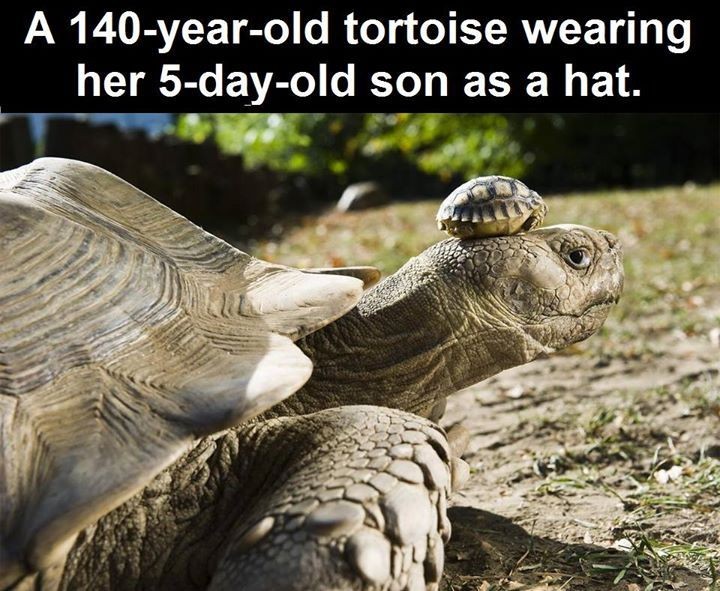 140 Year Old Tortoise And Her Baby Pictures Photos And