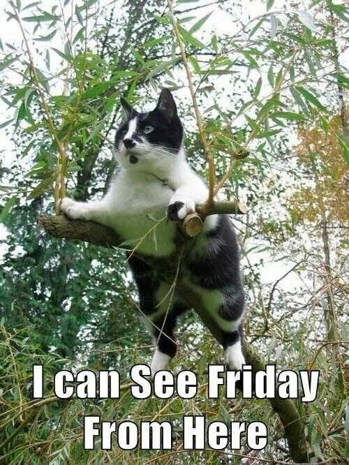 I Can See Friday From Here Pictures Photos And Images