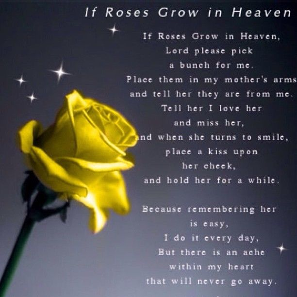 If Roses Grow In Heaven Pictures, Photos, And Images For