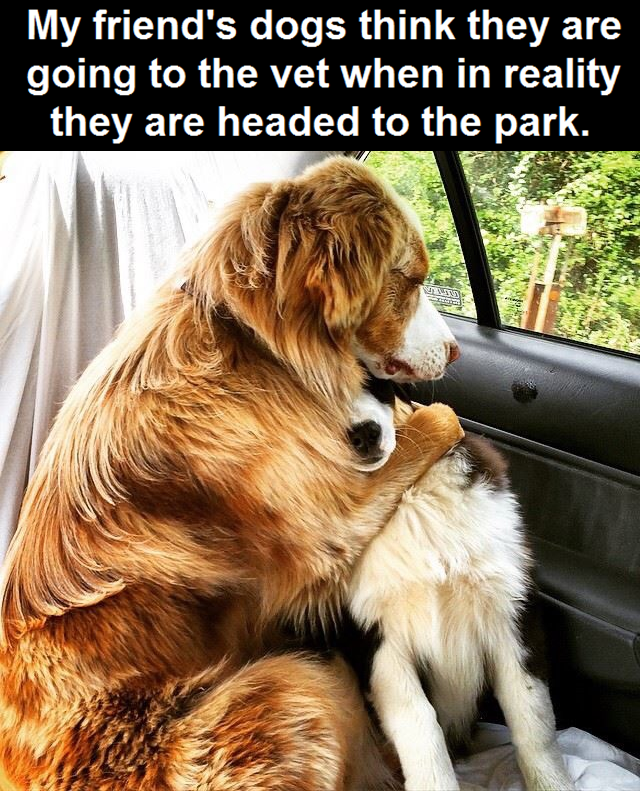 Dogs Think They Are Going To The Vet