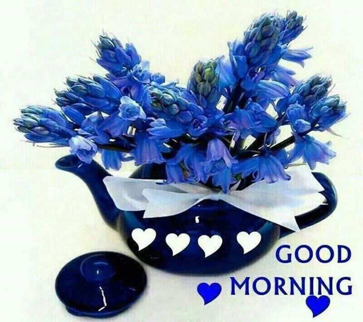 Blue Good Morning Flowers Pictures Photos And Images For