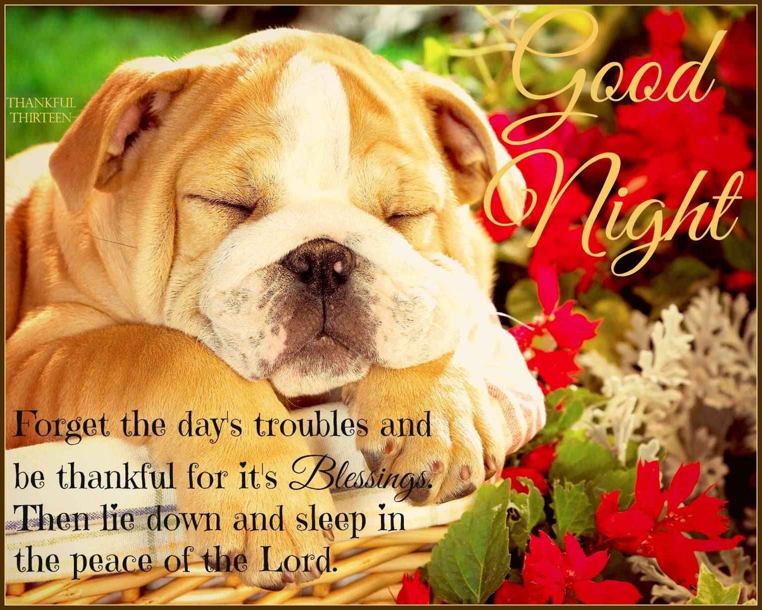 Good Night Lie Down In Peace Pictures, Photos, and Images ...