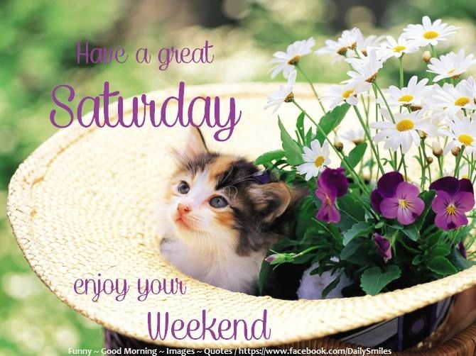 Image result for have a great saturday