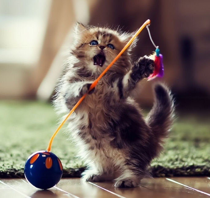 Self Playing Toys For Cats
