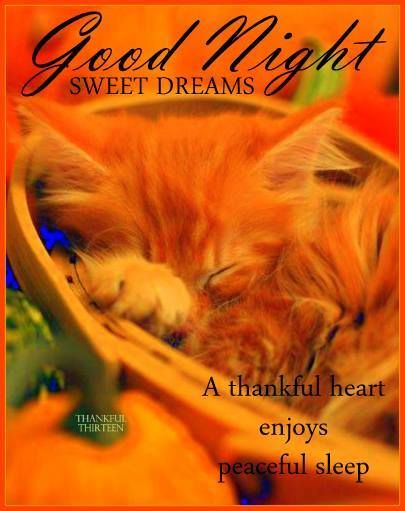 Good Night Sweet Dreams Pictures Photos And Images For