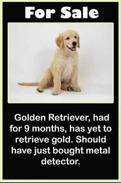 Golden Retriever For Sale Joke Pictures Photos And