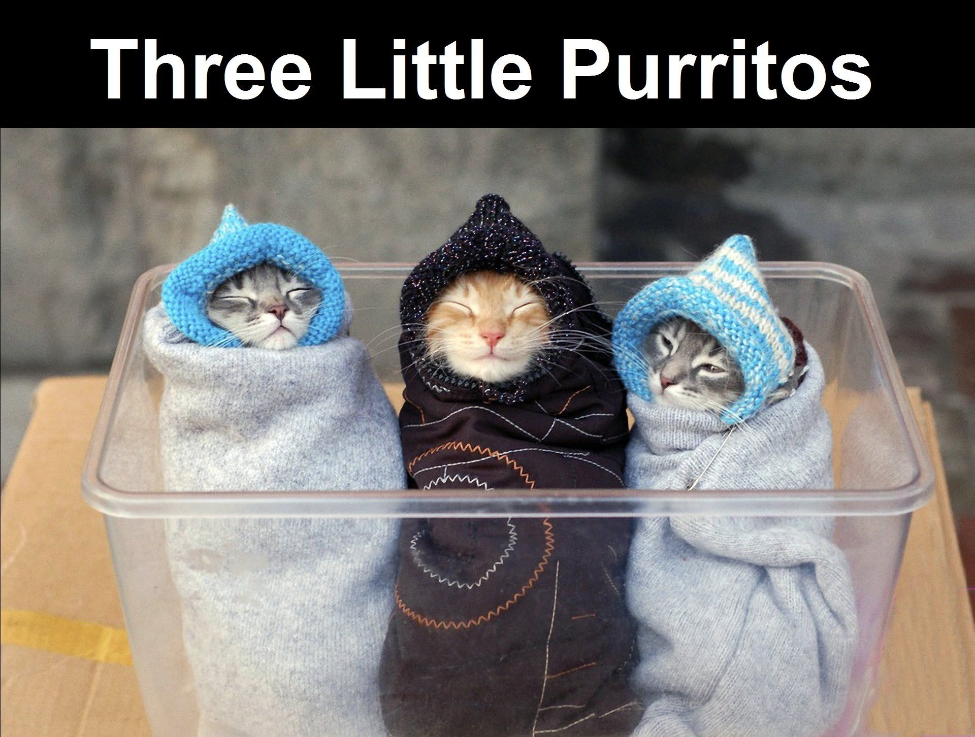 Three Little Purritos