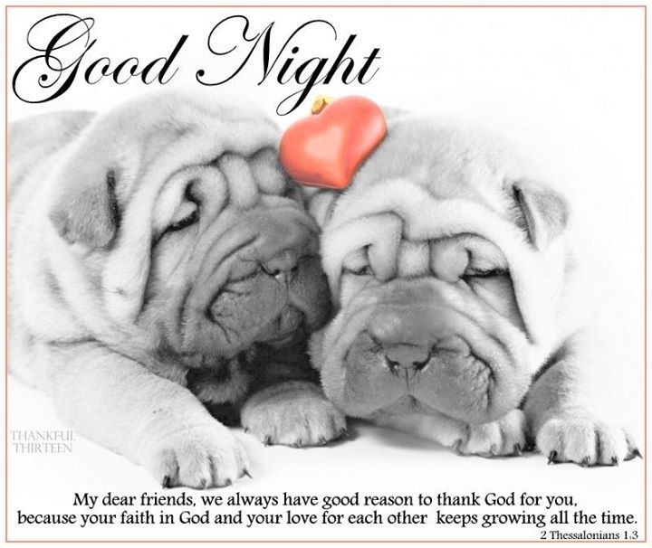 Cute Good Night Quotes | Good Night Quote With Cute Puppies Pictures Photos And Images For
