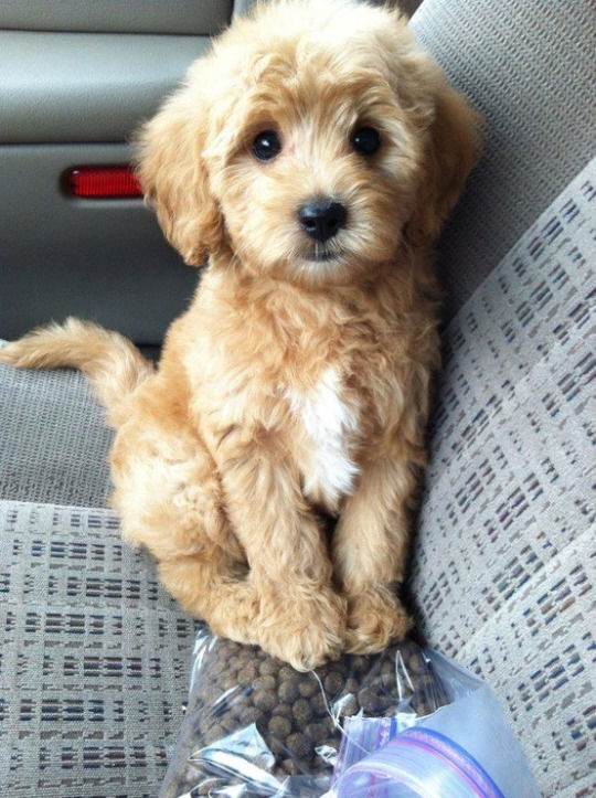 Cutest Puppy Pictures, Photos, and Images for Facebook, Tumblr ...