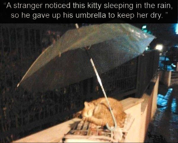 Stranger Noticed Cat Sleeping In The Rain So He Gave Up