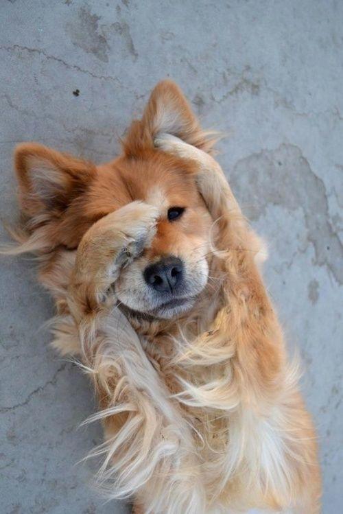 Doggy tumblr