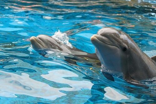 Cute Baby Dolphins Wallpaper