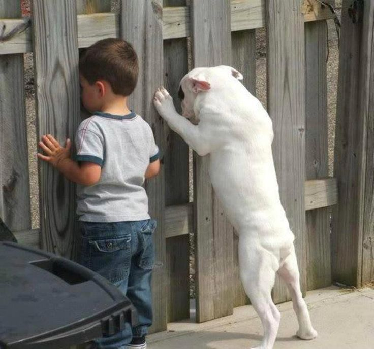 A Boy And His Dog Pictures, Photos, and Images for