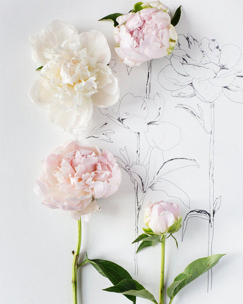 Flower Roses Pinterest: Drawing Flowers Pictures, Photos, And Images For Facebook
