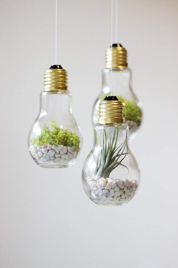 Lightbulb Terrariums Pictures Photos And Images For Facebook