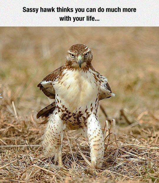 Falcon Punch Gif Tumblr