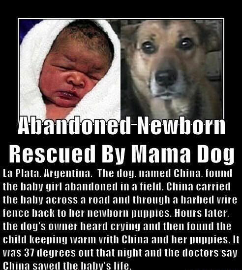 Abandoned Newborn Rescued By Mama Dog Pictures Photos