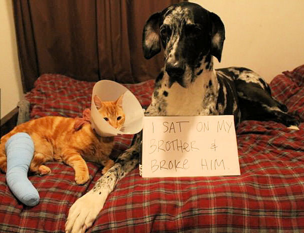 Dog Sat On Cat Pictures, Photos, and Images for Facebook