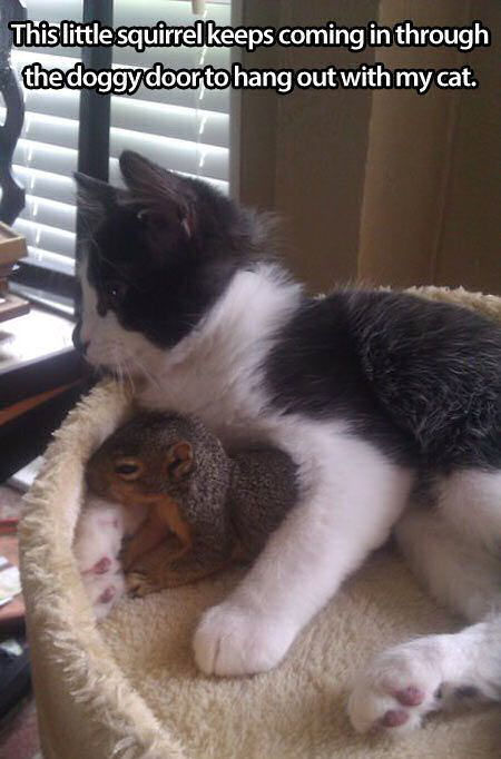 Squirrel Comes Through Doggy Door To Hang Out With Cat
