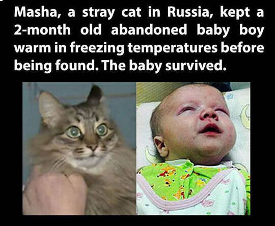 stray cat saves baby from freezing pictures  photos  and images for facebook  tumblr  pinterest