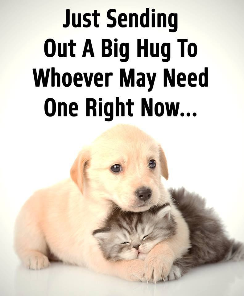 Just Sending Out A Hug To Whoever Needs It Right Now