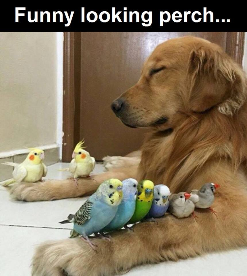 Funny Looking Perch