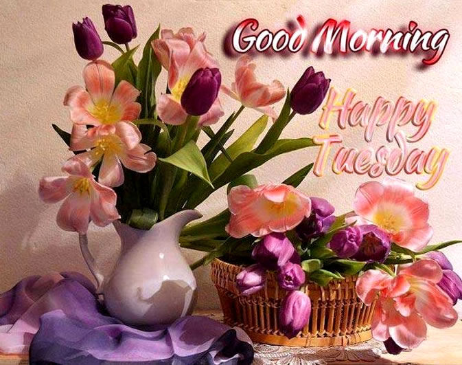 Good Morning Tuesday Messages : Good morning happy tuesday pictures photos and images