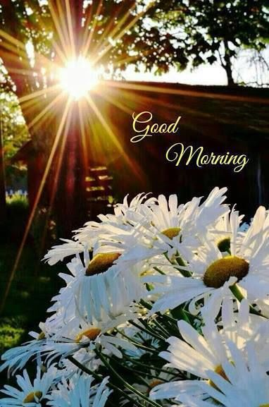 Good Morning Sun And Flowers Pictures Photos And Images