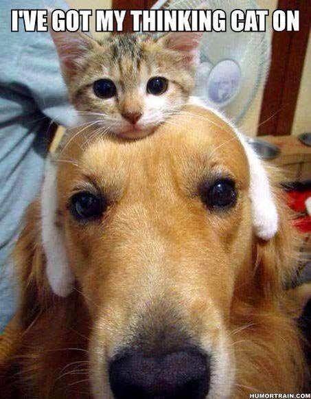 Bildresultat för i have got my thinking cat on