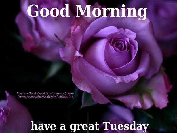 Good Morning Have A Great Tuesday Pictures, Photos, And