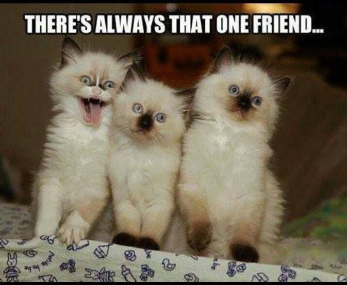 Theres Always That One Friend. Pictures, Photos, and