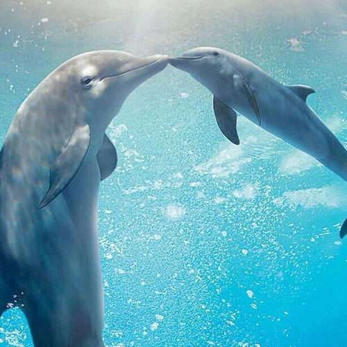 Dolphin Kissing Pictures Photos And Images For Facebook