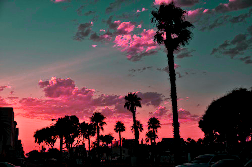palm trees sunset tumblr. Sunset And Palm Trees Tumblr N